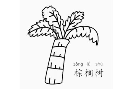 棕榈树怎么画