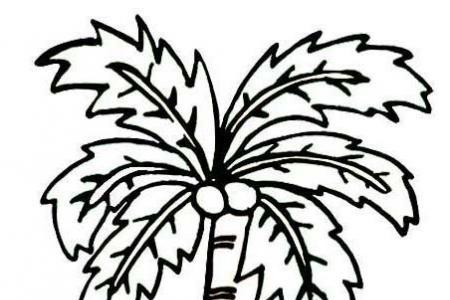 一棵高大上的椰子树简笔画图片