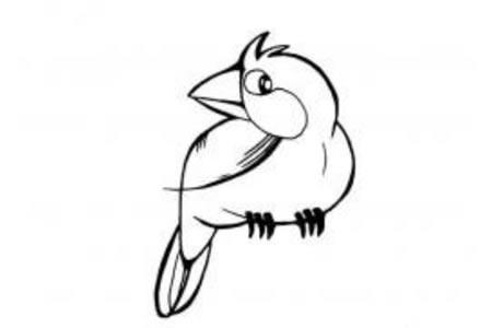小鸟简笔画大全 可爱的鹦鹉简笔画