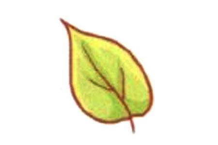 简单的叶子简笔画教程