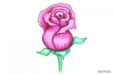 简单几步画漂亮的粉玫瑰