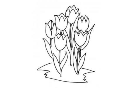六朵郁金香