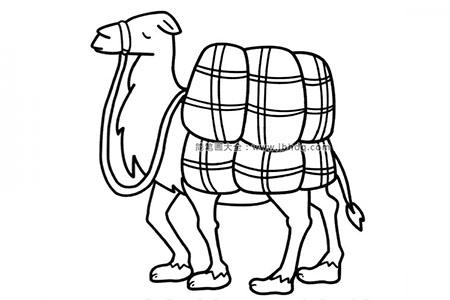 驼货物的骆驼