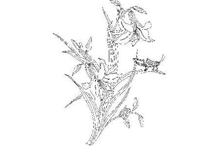 蚱蜢在百合花上