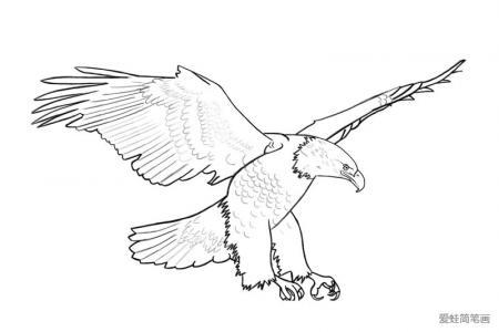 展翅高飞的老鹰