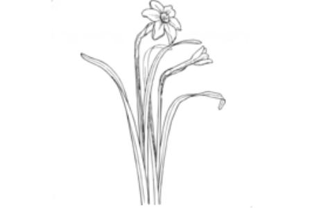 亭亭玉立的水仙花