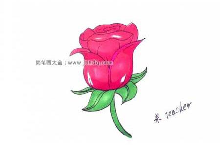 画玫瑰花简笔画的详细步骤