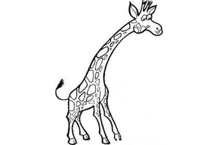 长颈鹿卡通形象简笔画
