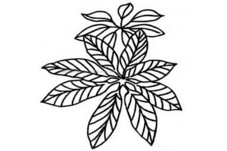 树的叶子简笔画