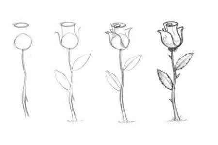 手绘漂亮的玫瑰花简笔画