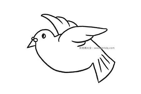 一组漂亮的鸽子简笔画