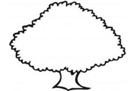 幼儿园教小朋友画大树