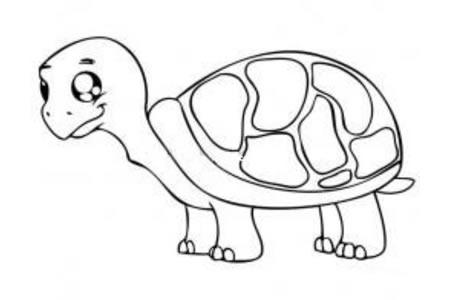 可爱的乌龟宝宝