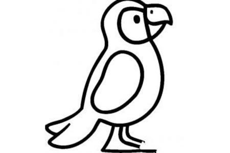 思考中的鹦鹉