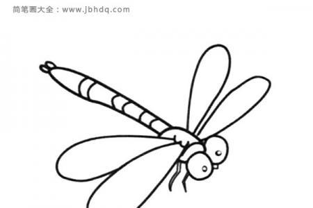 简笔画图片蜻蜓