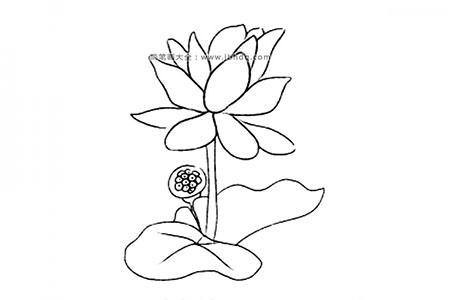 花朵的画法 荷花简笔画图片