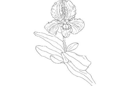简单的兰花画法