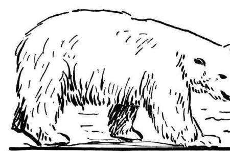 北极熊在海滩散步
