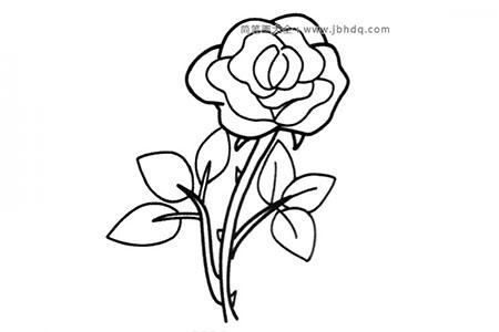 简笔画图片带刺的玫瑰