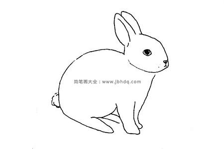 洁白的玉兔