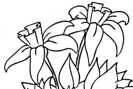 水仙花简笔画画法