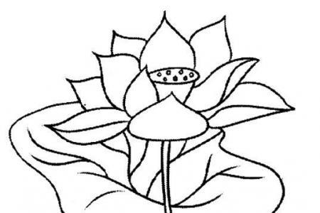手绘荷叶荷花素描铅笔