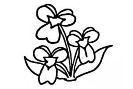 康乃馨简笔画画法