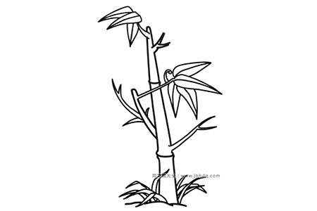 简笔画图片竹子