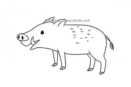 喂仔仔的猪妈妈简笔画图片