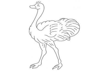 小鸟简笔画 鸵鸟简笔画画法