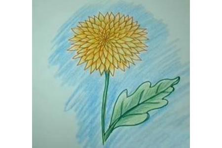 教你如何画菊花