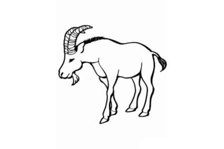动物简笔画大全 山羊简笔画图片