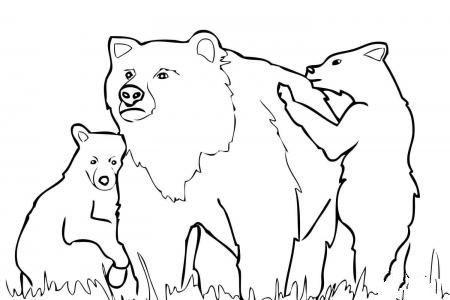灰熊妈妈和两只小灰熊