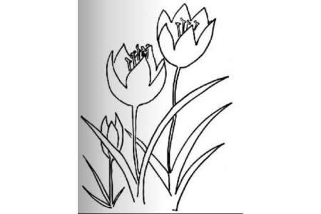 儿童花朵简笔画 郁金香