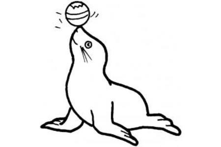 海洋动物简笔画大全 海豹简笔画图片