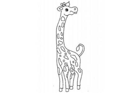 高傲的长颈鹿