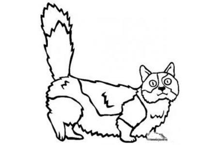 猫咪图片 曼切堪猫简笔画