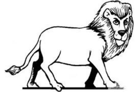 森林之王狮子简笔画图片