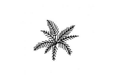 各种各样的树叶简笔画大全