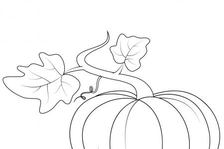 有叶子的南瓜