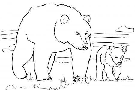 灰熊妈妈和小灰熊