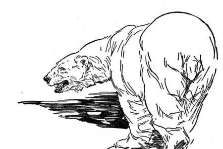 北极熊在冰面上行走