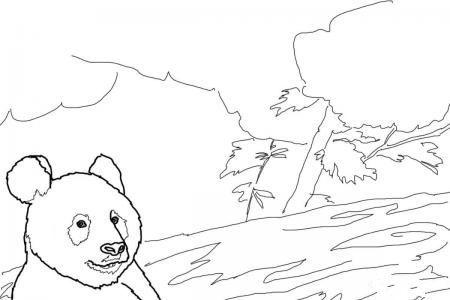 熊猫妈妈熊猫宝宝