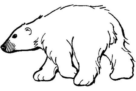 学画可爱的北极熊