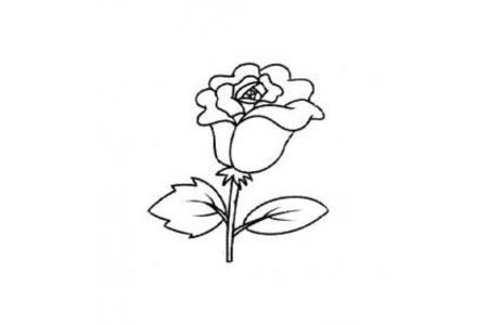 美丽玫瑰花简笔画学习