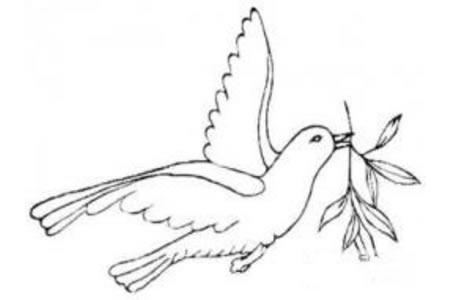 橄榄枝与和平鸽简笔画图片