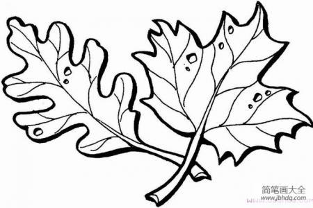 简笔画两片树叶的画法