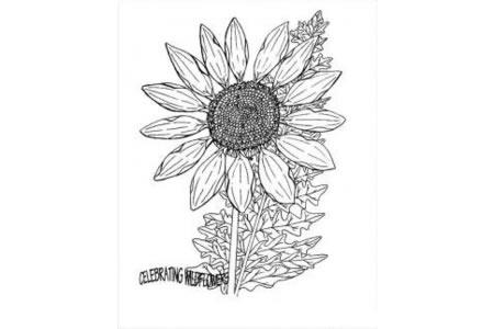 花朵图片 菊花简笔画图片