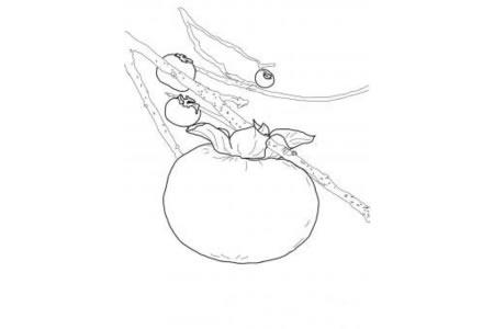 树上的柿子简笔画
