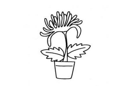 花盆里的花朵简笔画